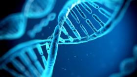 5- DNA.